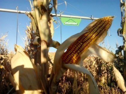 pivot riego cultivos