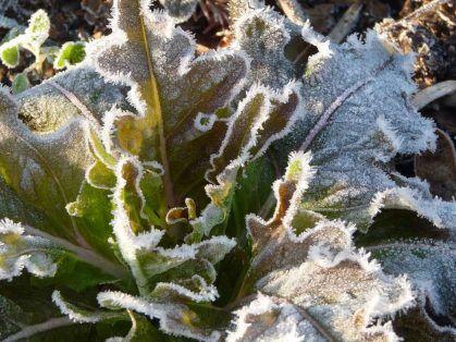 prevencion-heladas-en-cultivos